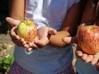 apple-1572648