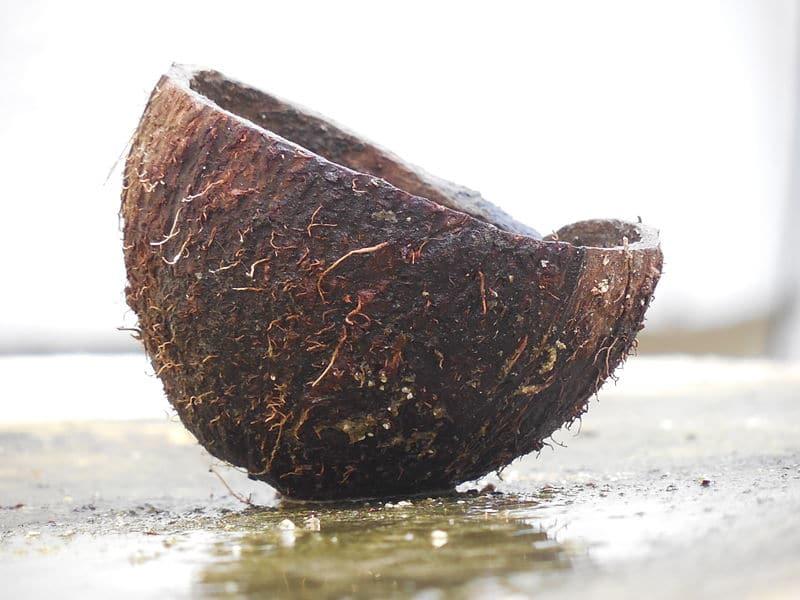 A_cut_coconut_shell