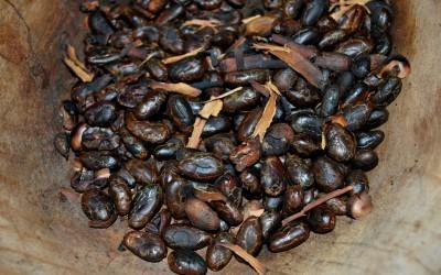 CacaoChonita14