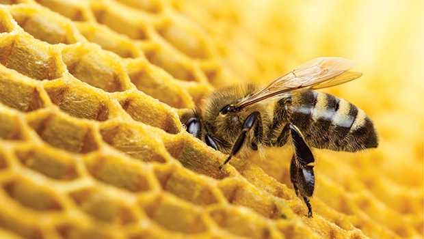 Right on the honey - www naturalproductsonline co uk