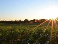 corn-691634_960_720