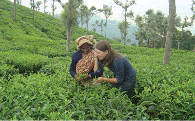 erica-trying-to-pluck-tea-in-ceylon