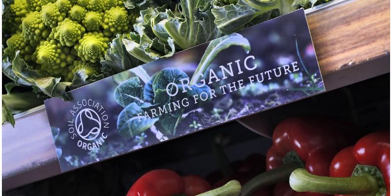 EARTHY ORGANIC FOOD.