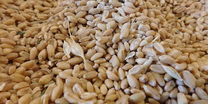 wheat-1305619_960_720