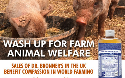 10-14 Image Two - Dirty Pigs CIWF (4)