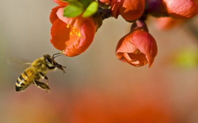 1280px-Pollinationn