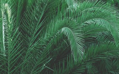 green-leaves-palm-92733